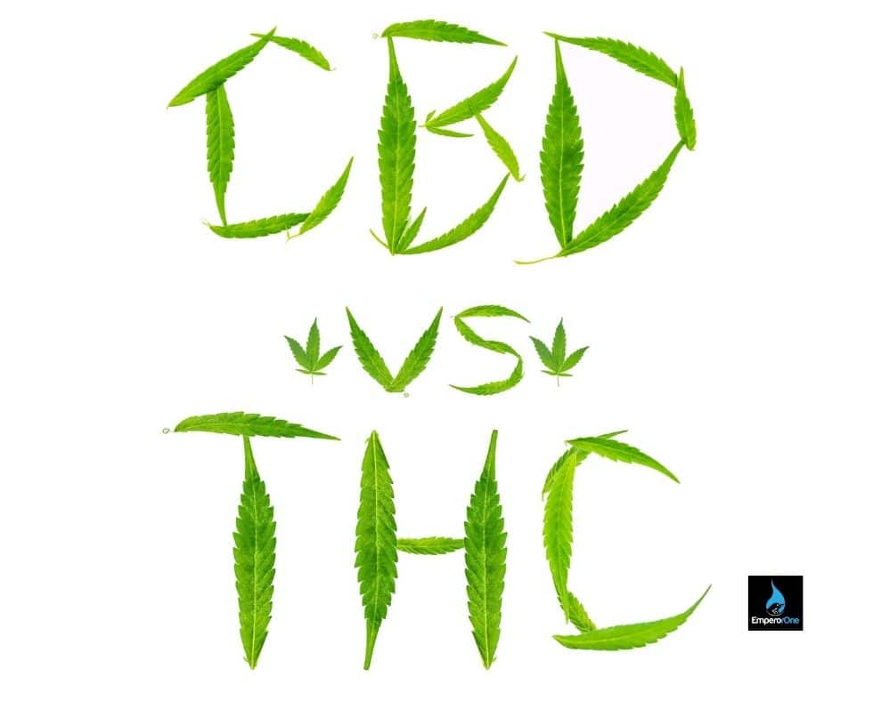 How does THC CBD lotion work