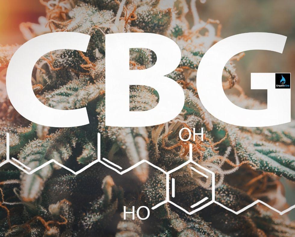 cbd vs cbn